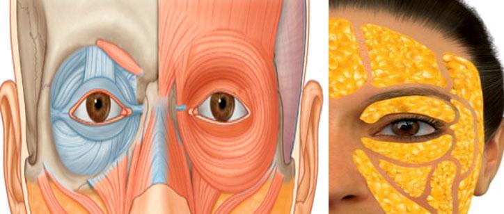 Rejuvenecimiento periocular no quirúrgico madrid